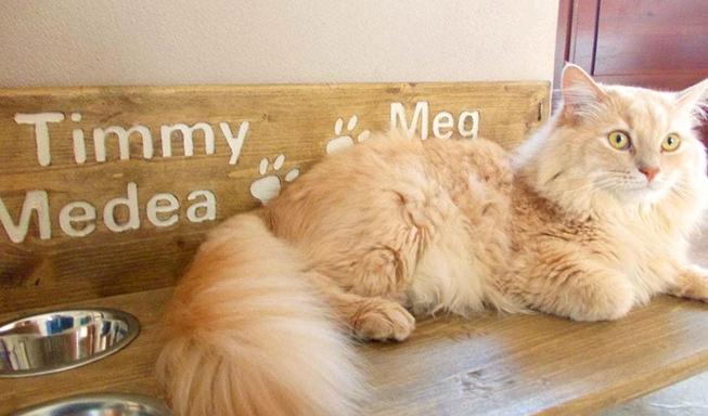 Mensola per gatti in legno artigianale
