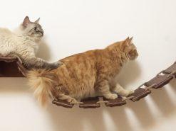 Passerella per gatti artigianale in legno