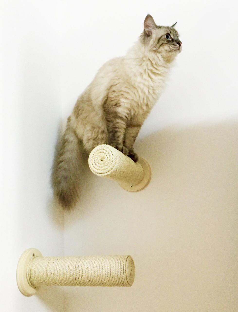 Tiragraffi muro artigianale for Arredamento per gatti