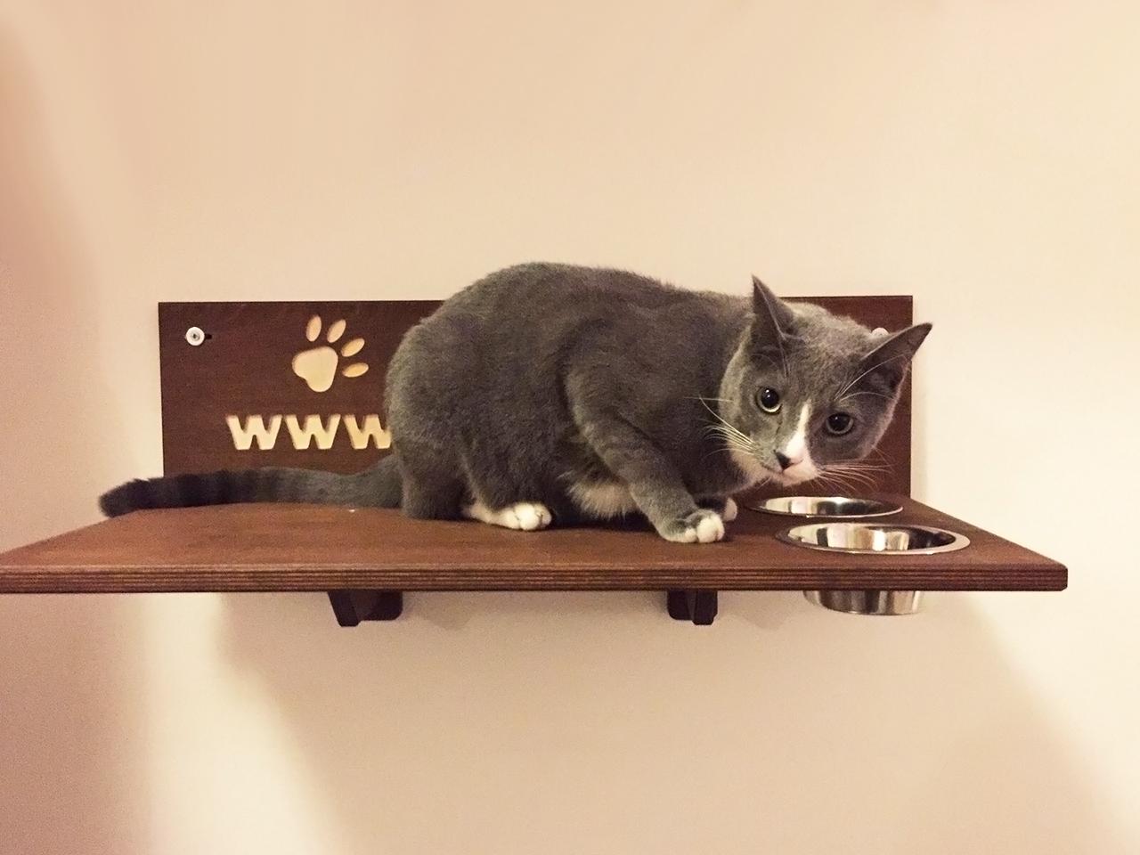 Bowl shelf mensola con ciotole e scritta intagliata per for Arredamento per gatti