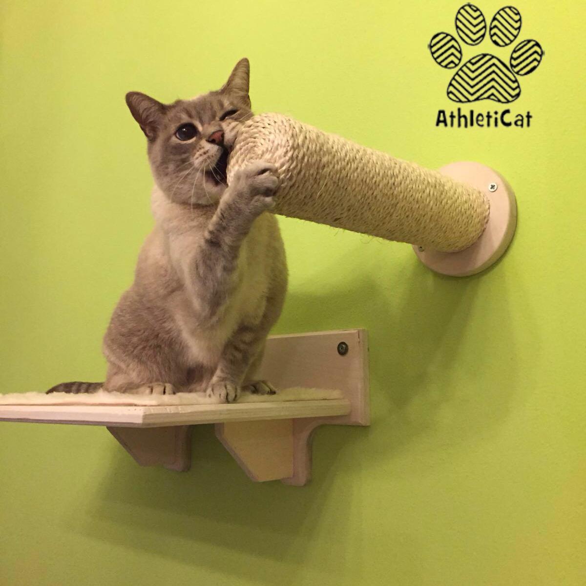 Parete per gatti in legno athleticat