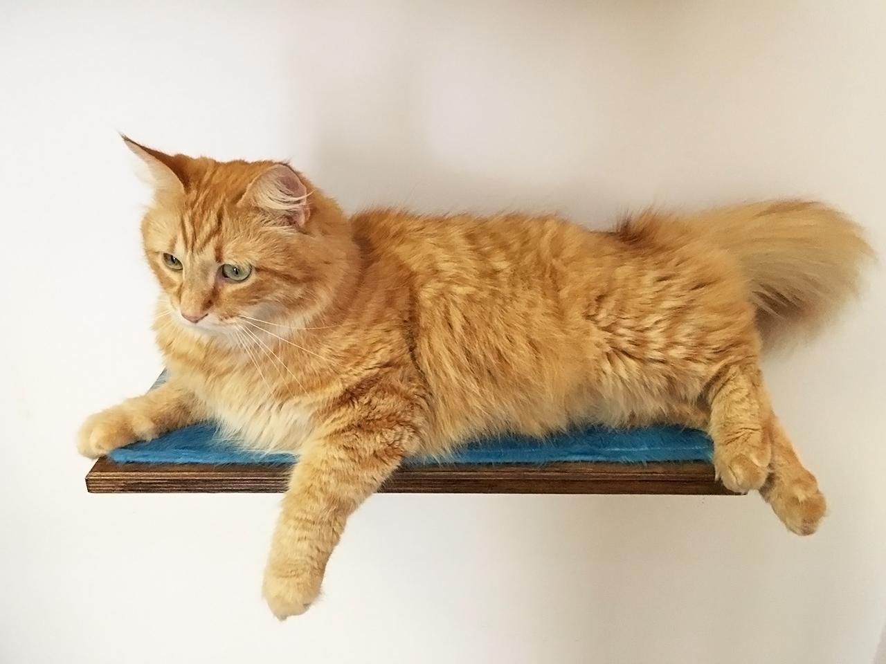 Mensola con tessuto per gatti relax for Arredamento per gatti