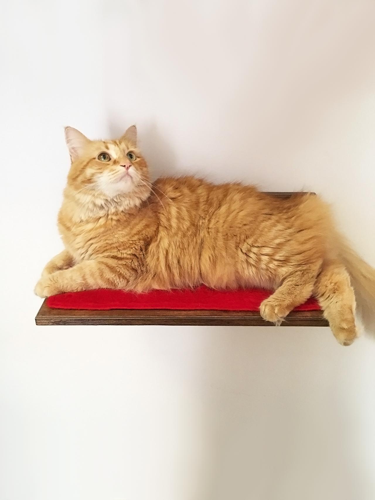 Arredo per gatti archivi athleticat for Mensole per gatti ikea