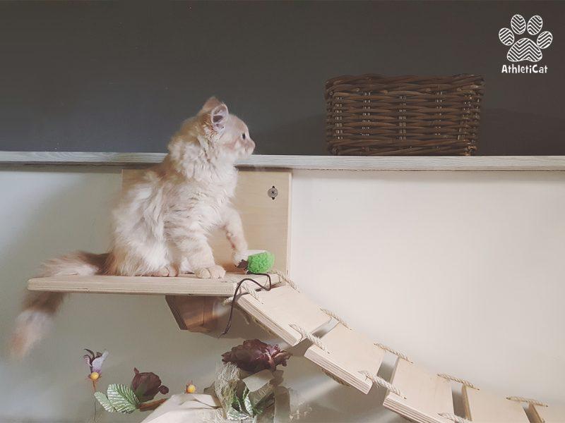 Arredamento per gatti in legno athleticat