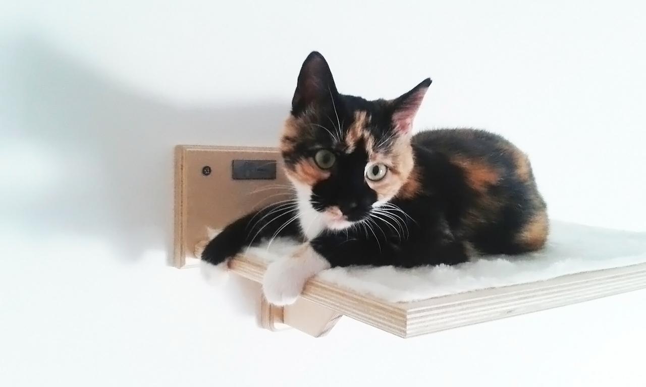 Percorsi per gatti in legno artigianali athleticat