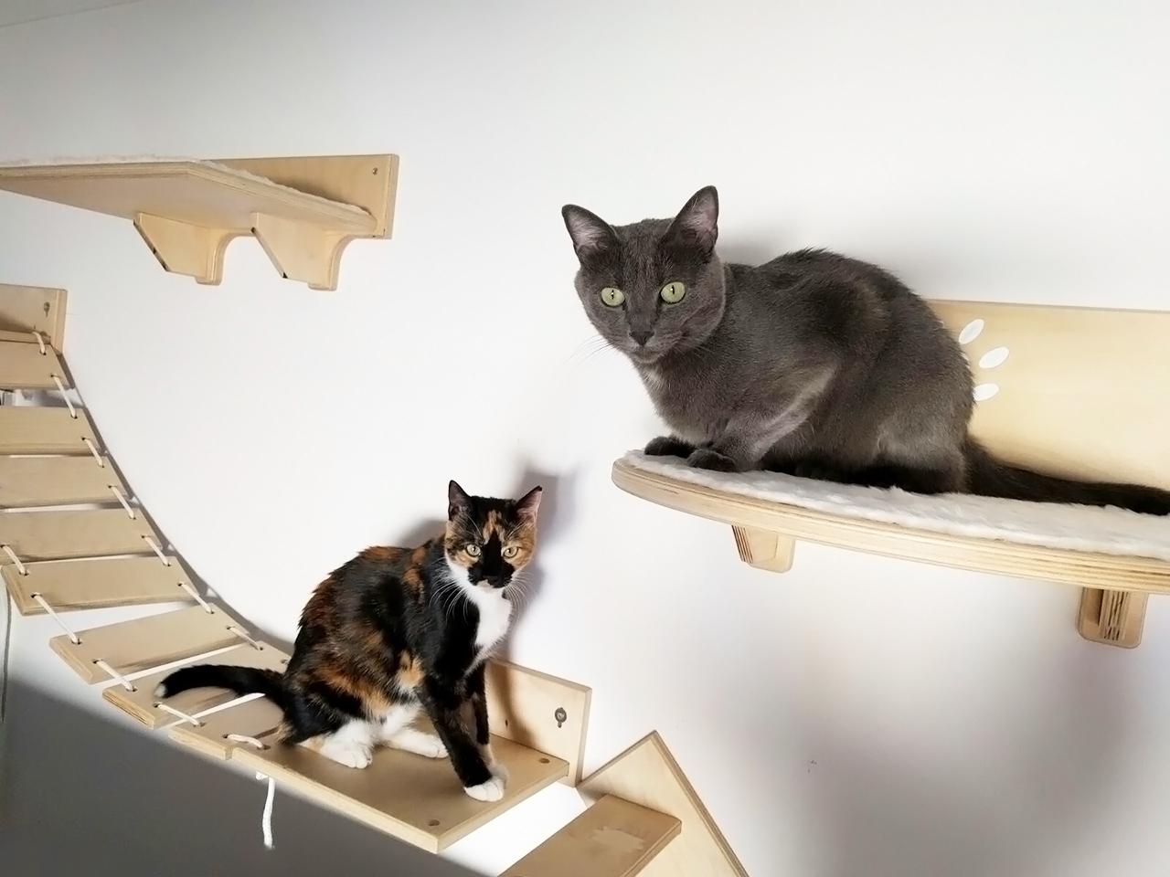 parete attrezzata per gatti in legno athleticat