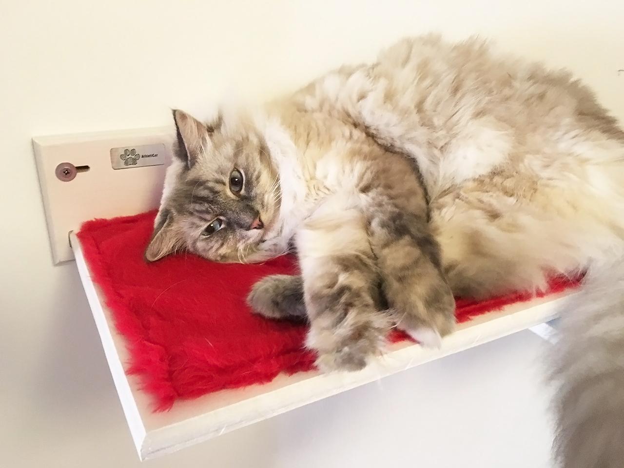 Mensola per gatti artigianale
