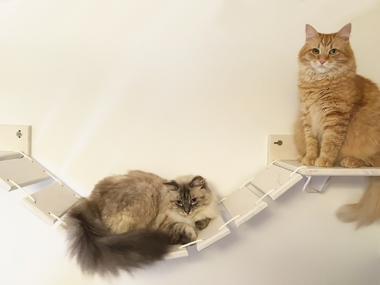 Ponte tibetano per gatti in legno athleticat