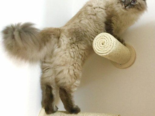 Tiragraffi per gatti a muro in legno artigianale