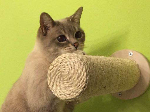 Tiragraffi muro per gatti