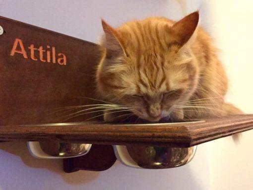 Mensola con ciotole per gatti