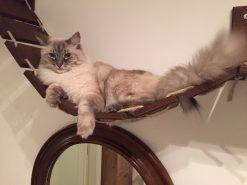 Ponte per gatti artigianale in legno con intagli