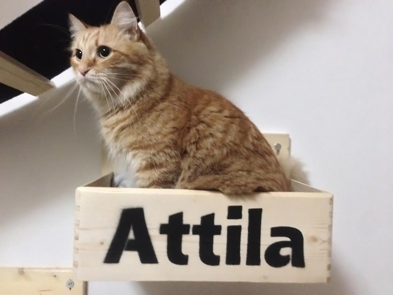 Cucce per gatti artigianali in legno