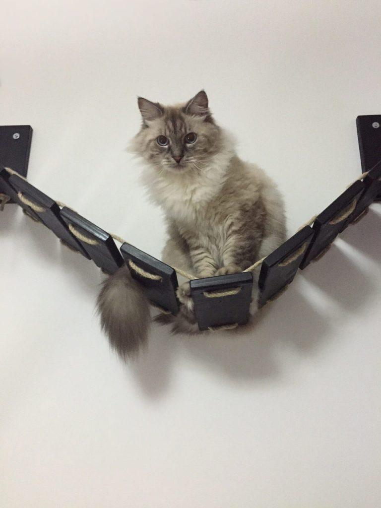 Passerella per gatti Foto6