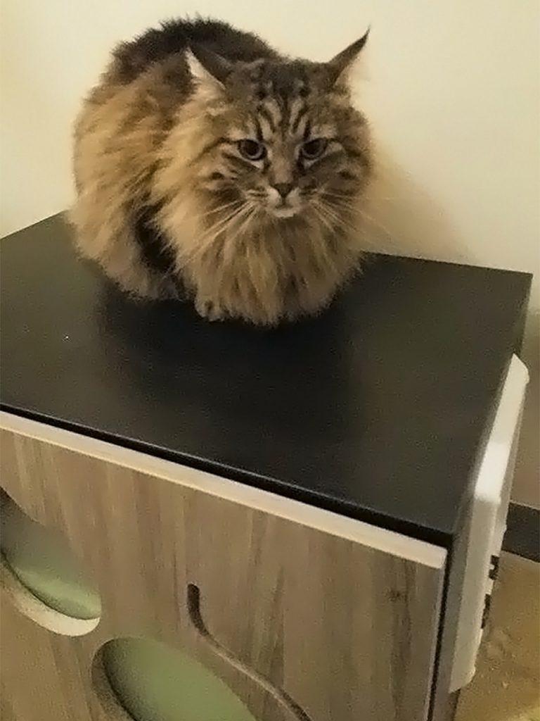 mobiletto-copri-lettiera-per-gatti