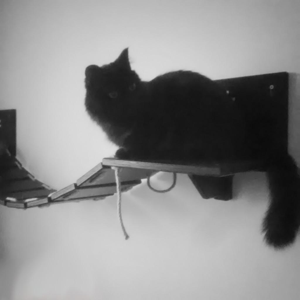 Bridge-for-cats