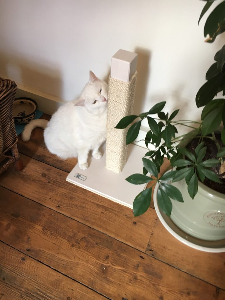 TIragraffi-per-gatti-legno-foto2