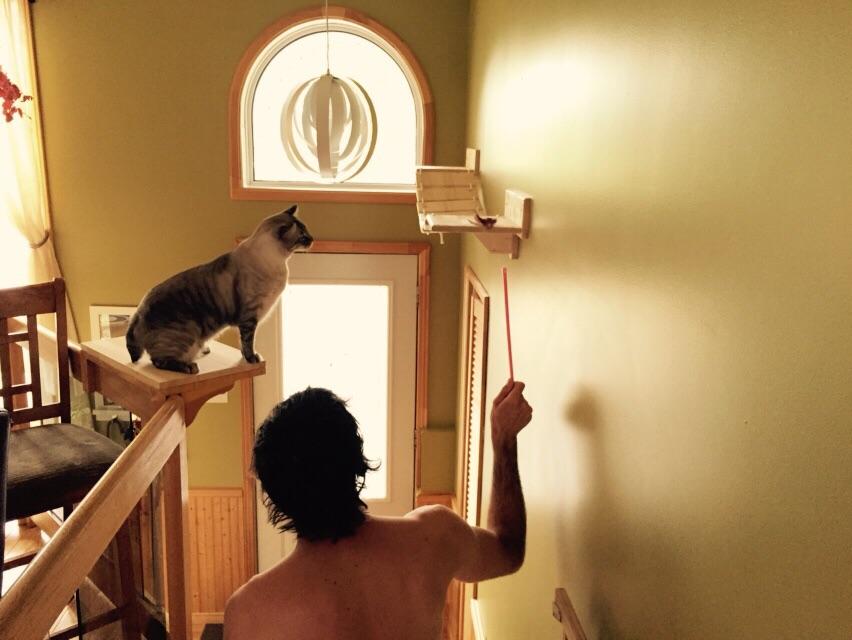 ponte-per-gatti-artigianale