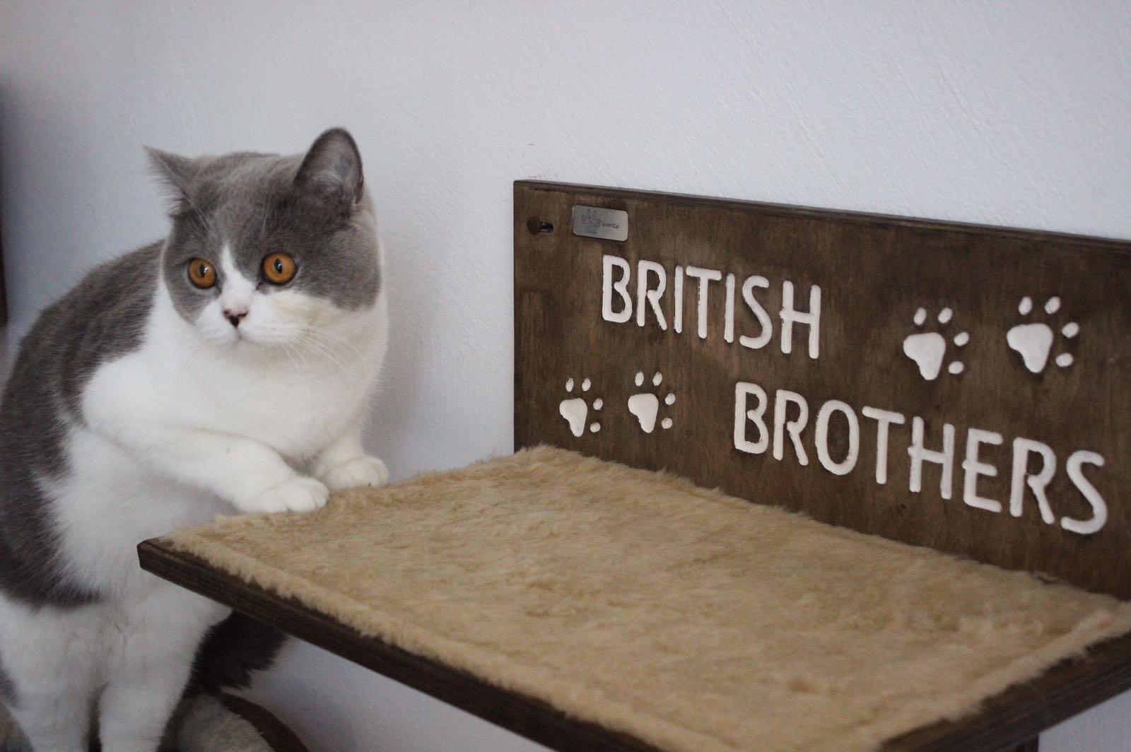 Mensola per gatti con nome intagliato e zampine for Mensole per gatti ikea