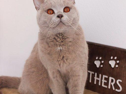 mensola per gatto con nome inciso