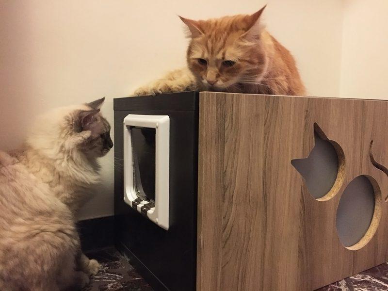 Mobile per lettiera per gatti