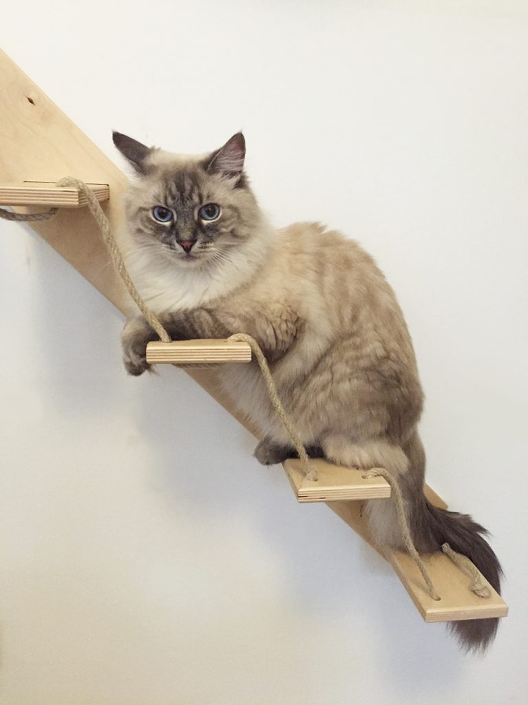 Scala per gatti artigianale