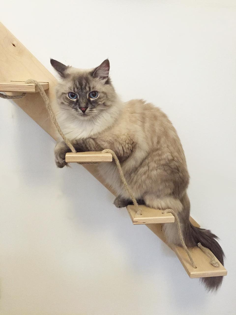 Scala per gatti artigianale for Arredamento per gatti