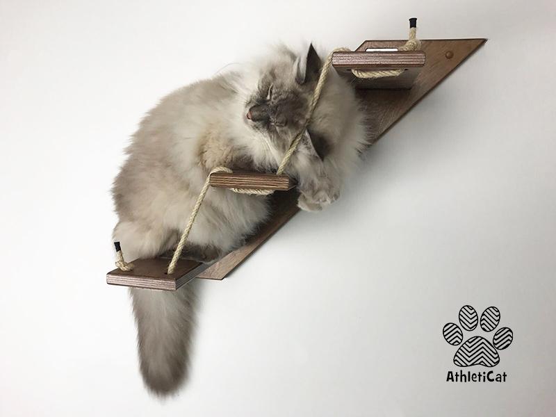 Scala per gatto