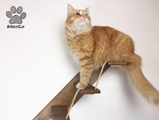 Scale per gatti in legno