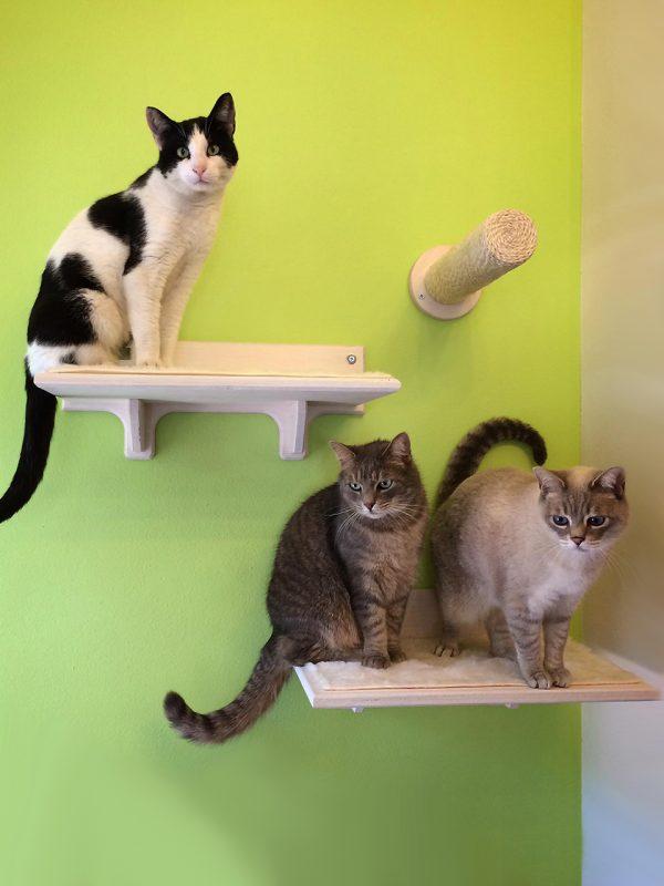 Palestra per gatti in legno AthletiCat