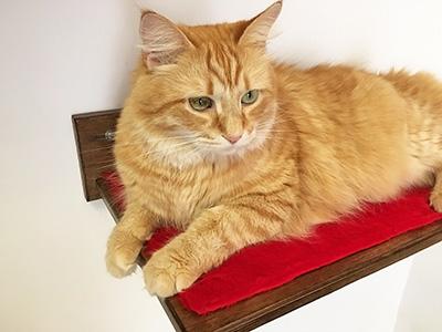 Mensola per gatti athleticat