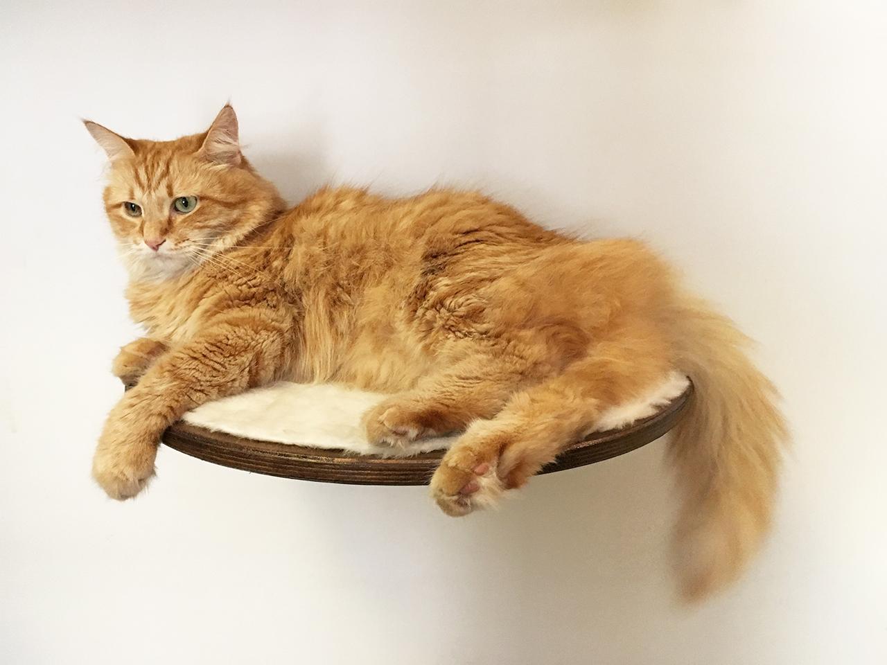 Mensola per gatti zampa incisa 3