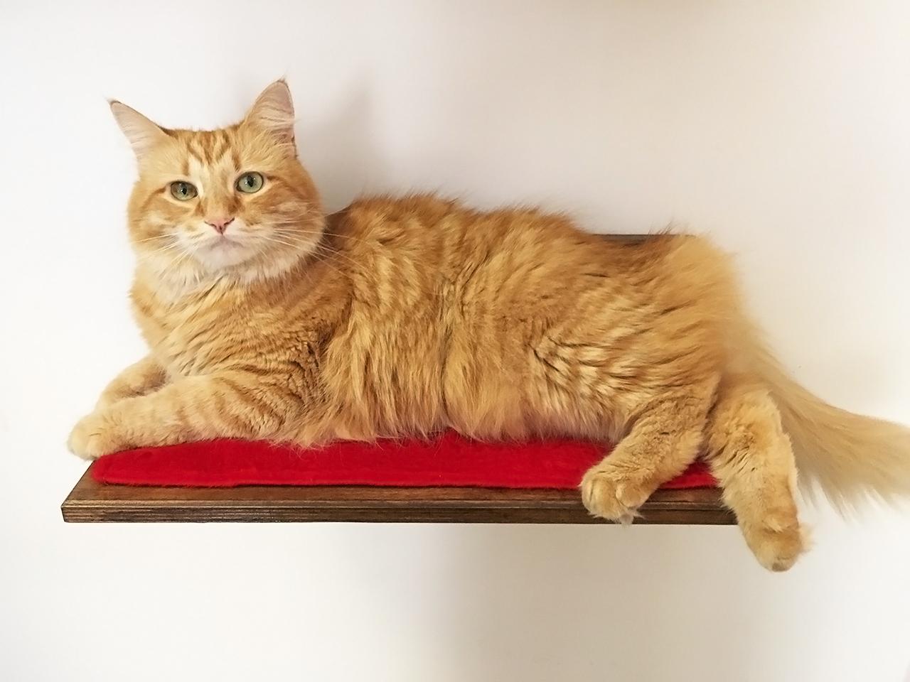 Mensola per gatti con peluche relax for Mensole per gatti ikea