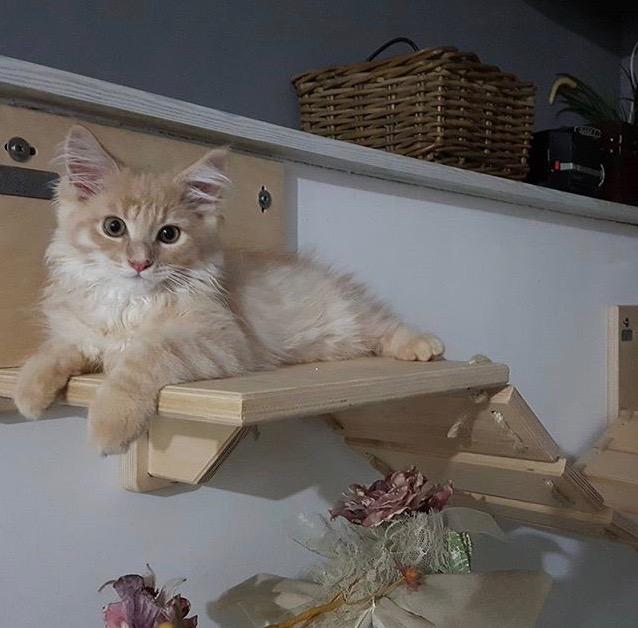 Arredamento-per-gatti-athleticat-5