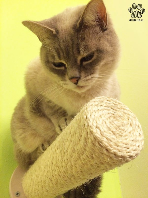 Parete attrezzata per gatti artigianale in legno
