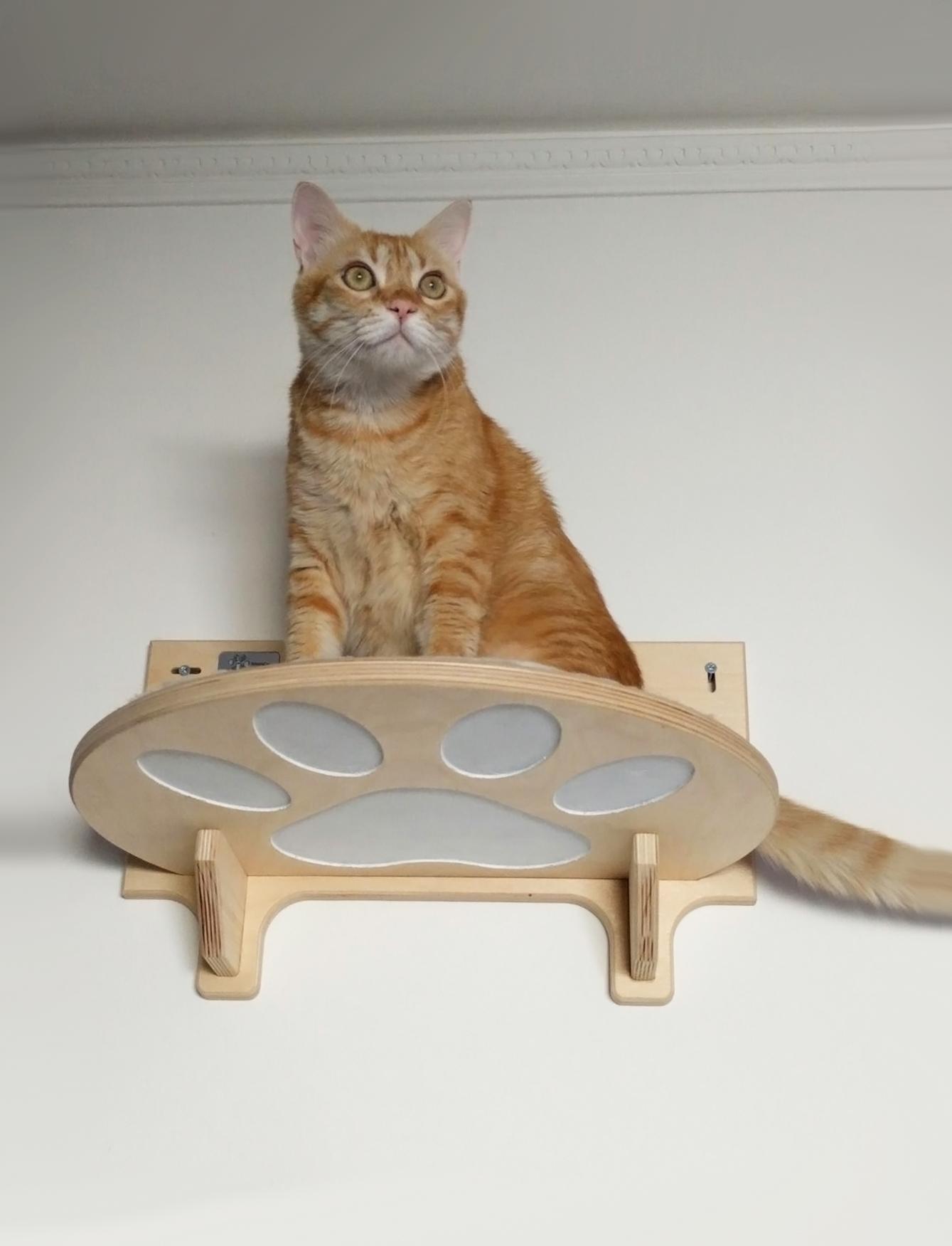 Percorsi per gatti in legno artigianali athleticat for Sito web dove puoi costruire la tua casa