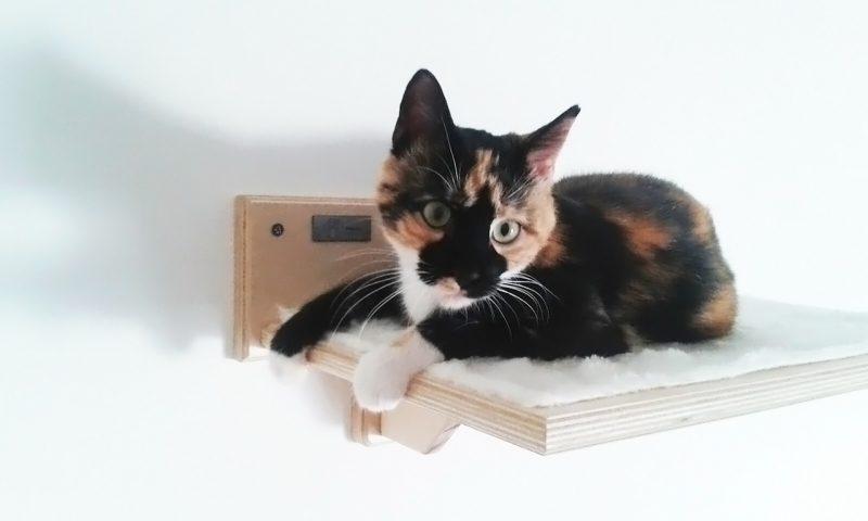Percorsi per gatti in legno