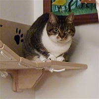 Ponte per gatti in legno