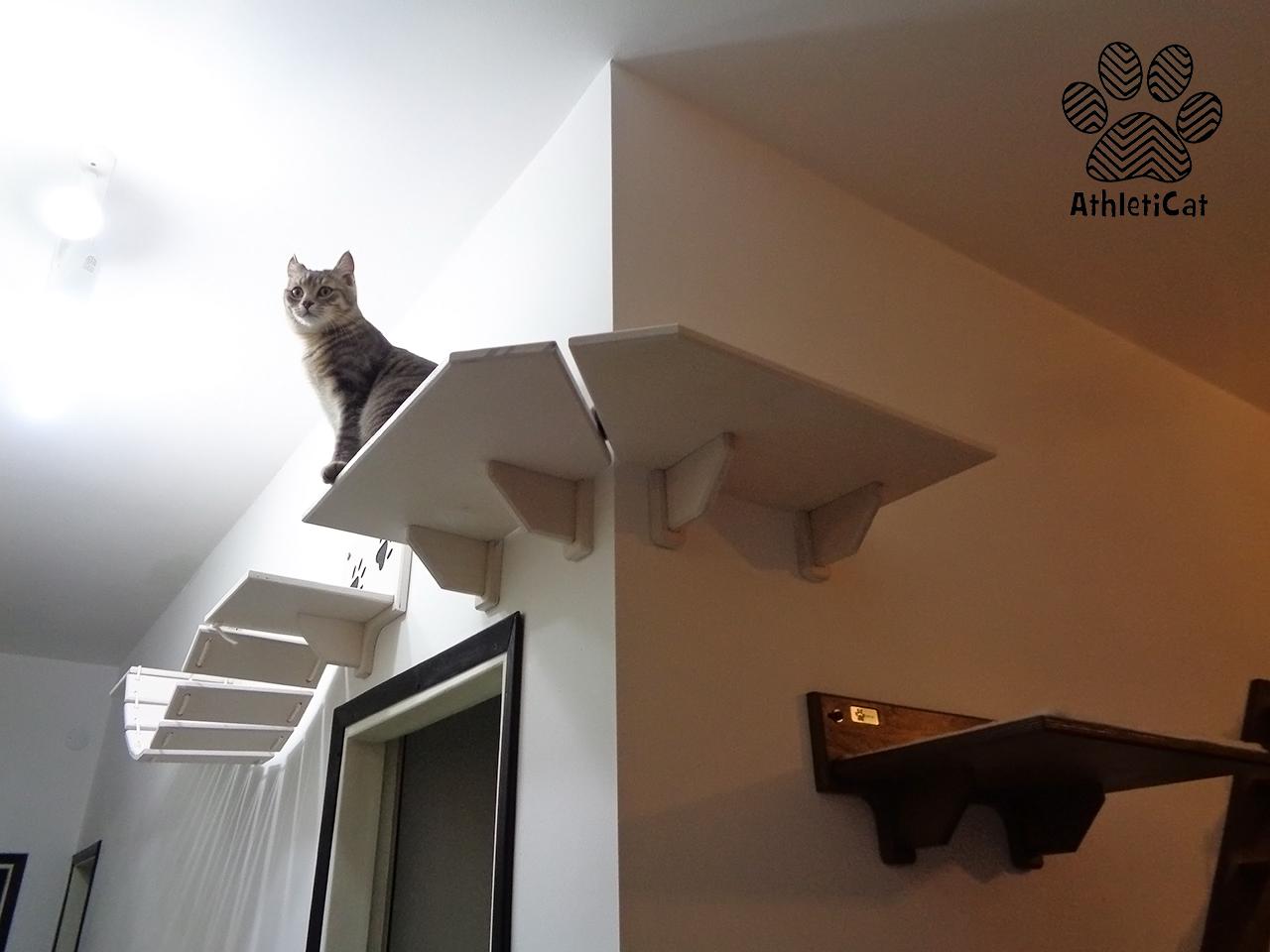 Mensola per gatti ad angolo in legno made in italy - Tiragraffi da esterno ...