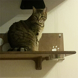 Mensola per gatti ciotole legno