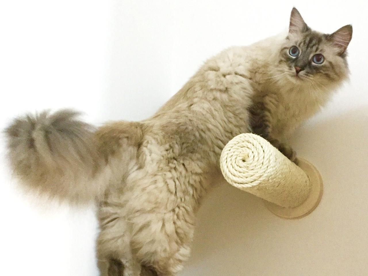 Tiragraffi per gatti a parete athleticat for Parete attrezzata gatti