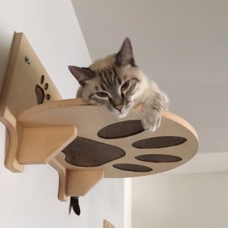 Mensole per gatto