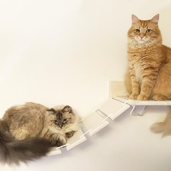 Percorsi per gatti
