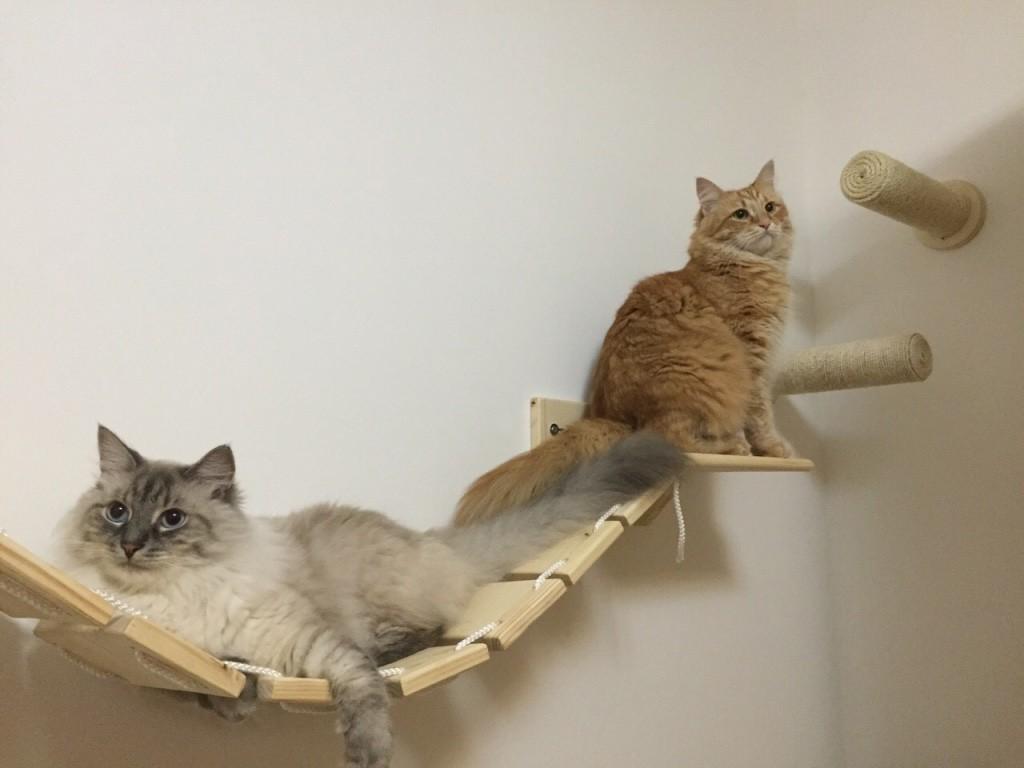 Percorsi per gatto