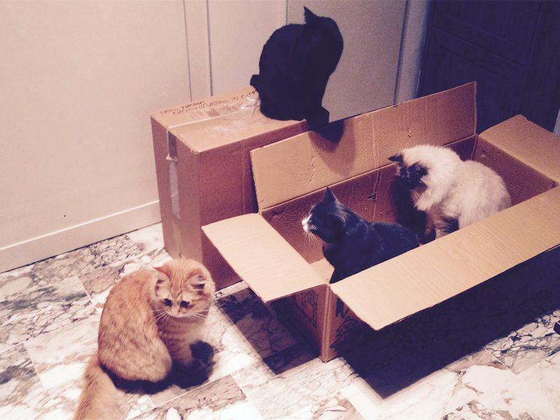 Gatti trasloco