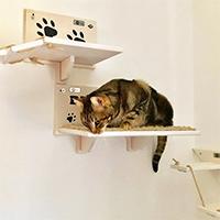 Palestra per gatti recensione