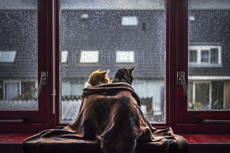 come fare un trasloco con il gatto