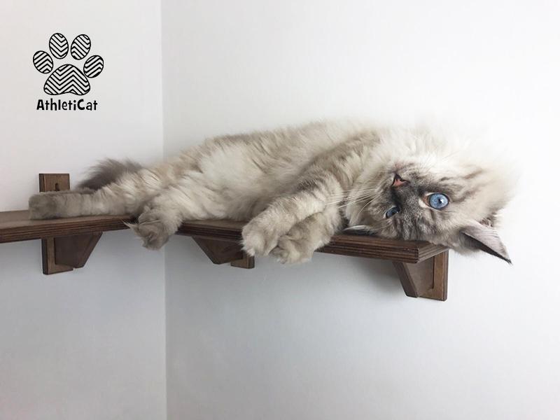 Mensola angolare per gatti in legno made in italy for Mensole per gatti ikea