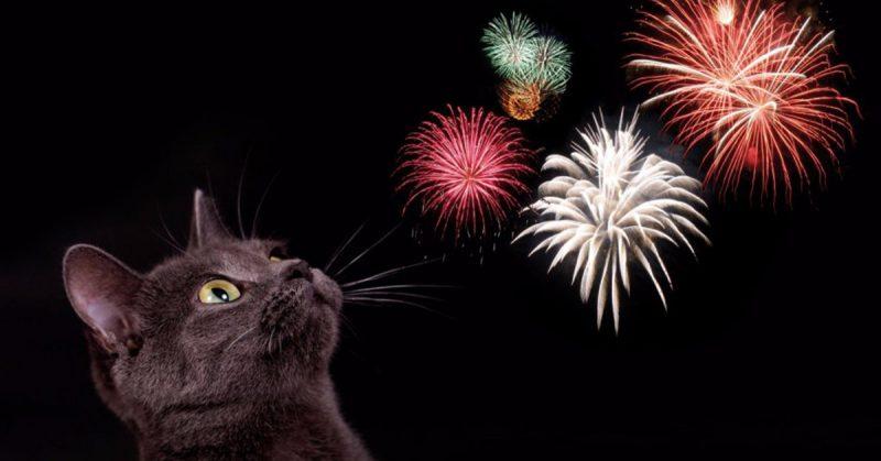 Gatto capodanno botti fuochi artificio