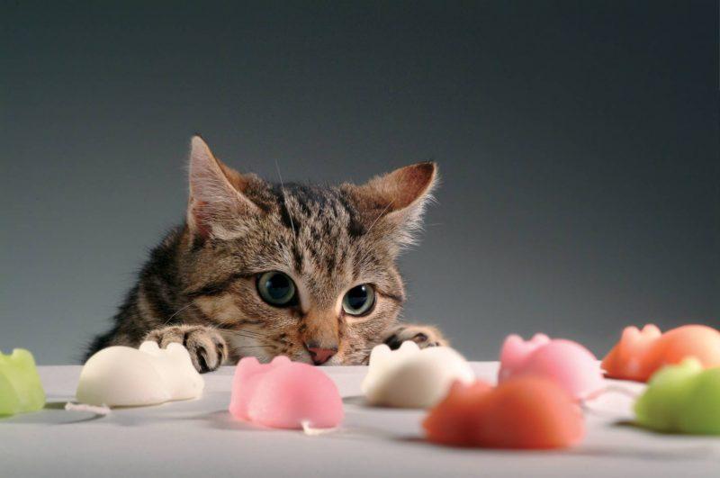 Gatto gioca topolini